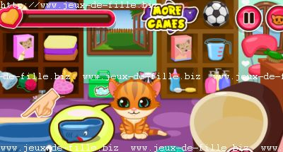 Jeux de chat : babysitting de chat , catsitting